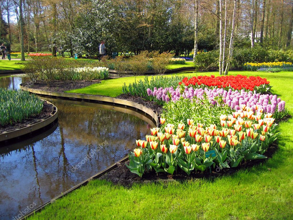 Haarlem. Flowers Tulips on the bank of lake in a botanical garden