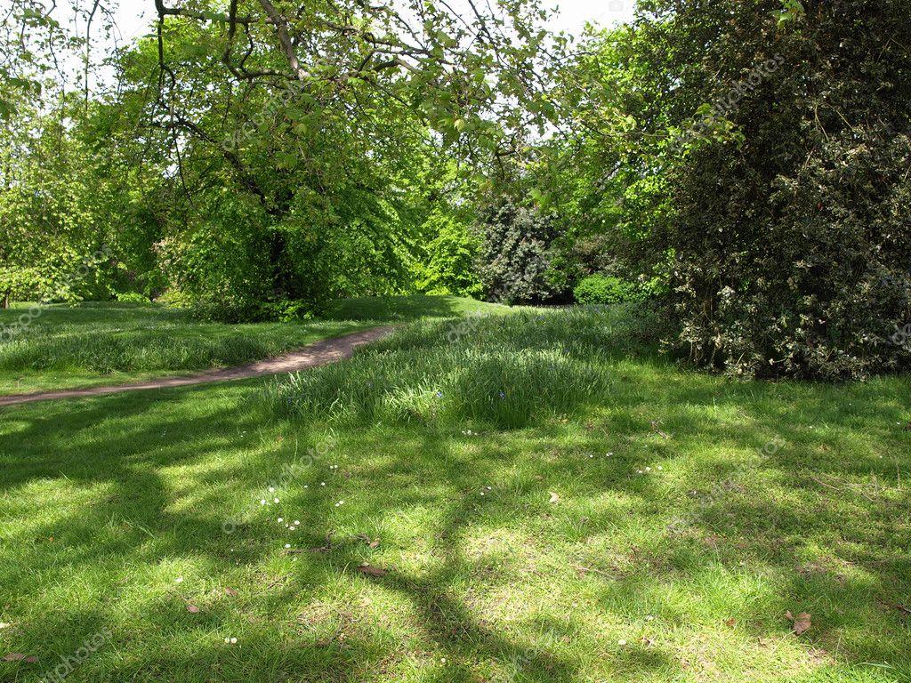 Greenery background — Stock Photo © claudiodivizia #3531227