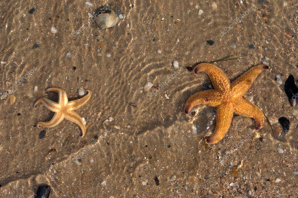 star fish on caribbean beach
