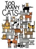 Zu viele Katzen