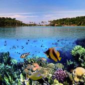 Foto einer Korallenkolonie