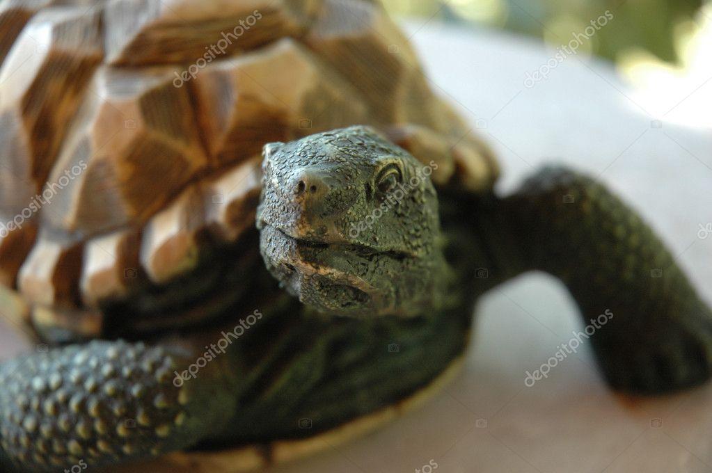 Stein Schildkröte Statue, Die Für Zuhause Innendekoration Verwendet U2014 Foto  Von Bluemarine