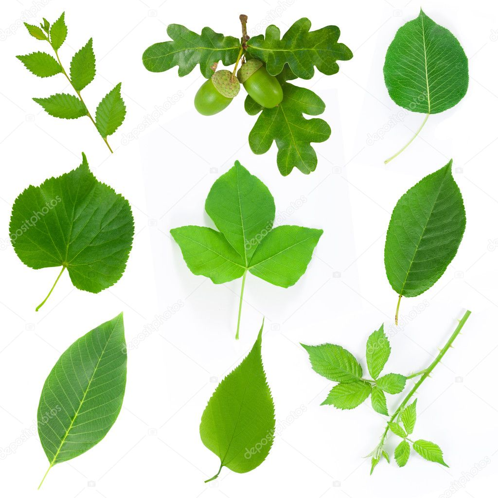 Set of leaves isolated on white