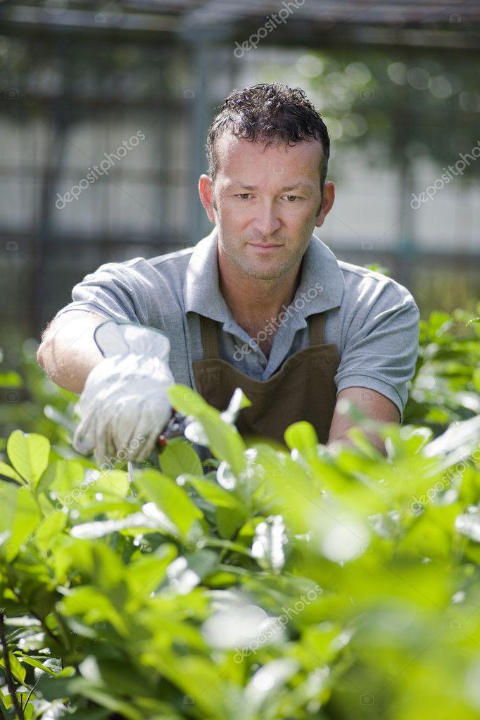 Jardinero en el trabajo foto de stock stefanolunardi for Trabajo jardinero