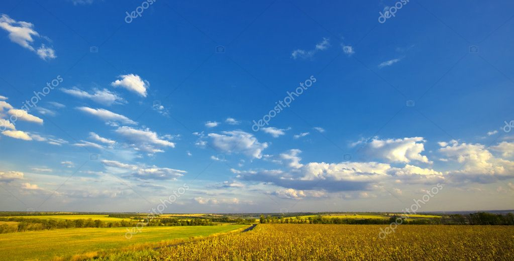 Summer rural landscape: cloudy blue sky over field