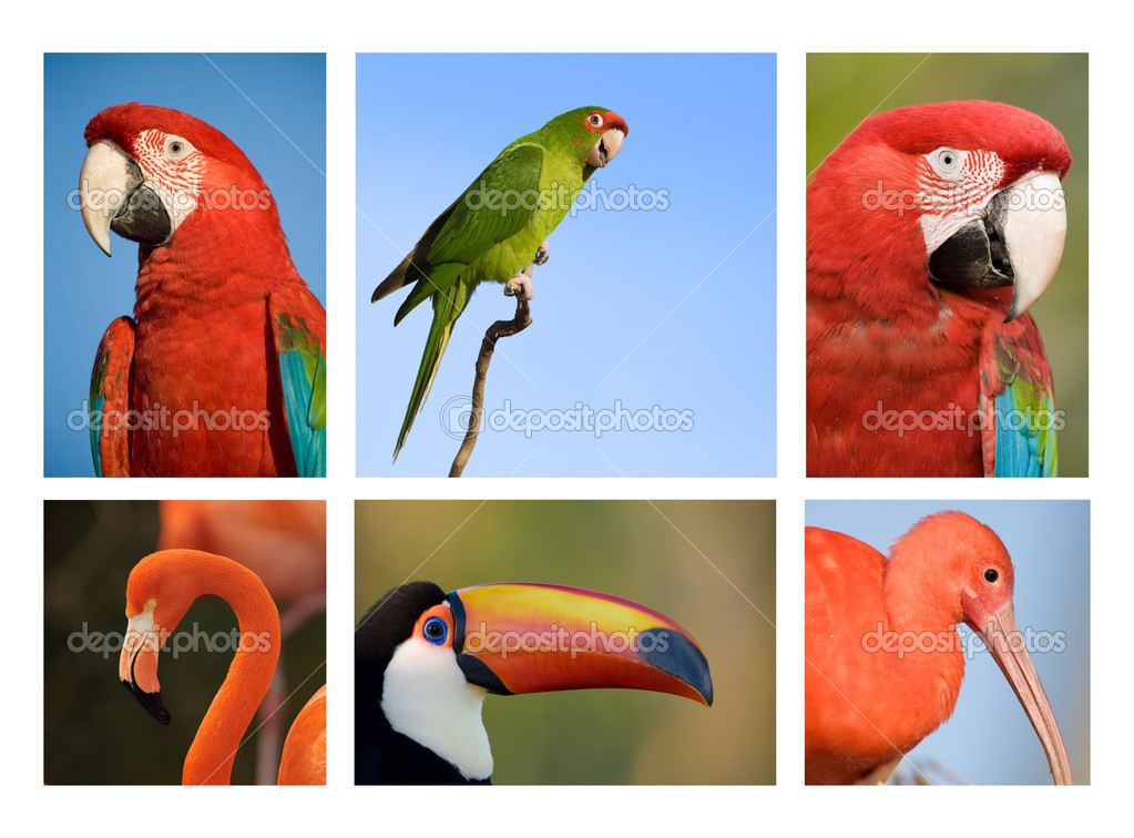 Different tropical birds collection 1.