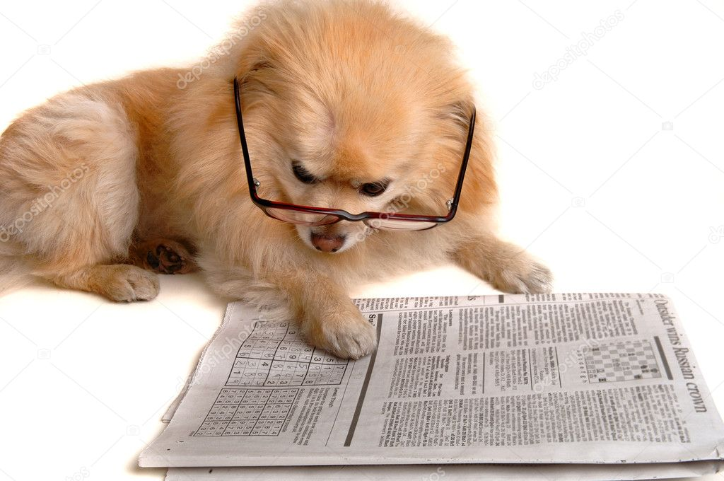 ᐈ Dog reading newspaper stock images, Royalty Free dog reading newspaper  photos | download on Depositphotos®