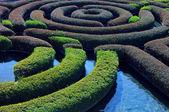 giardino siepe