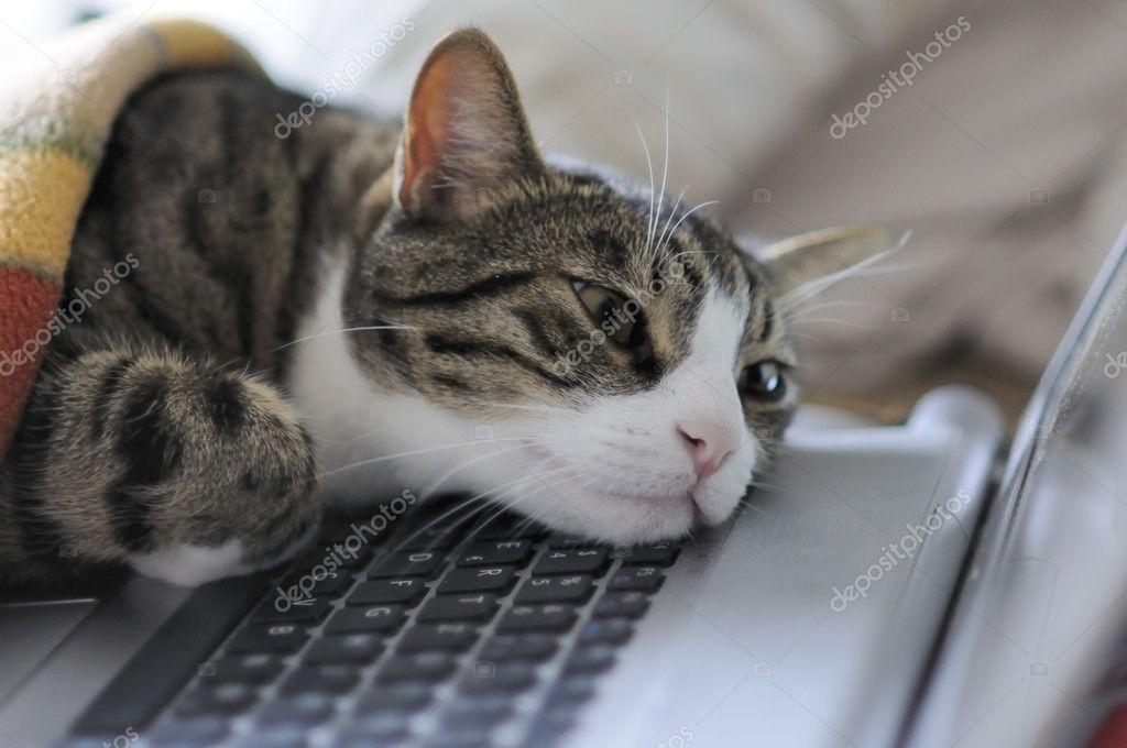 sleepy animals with computers