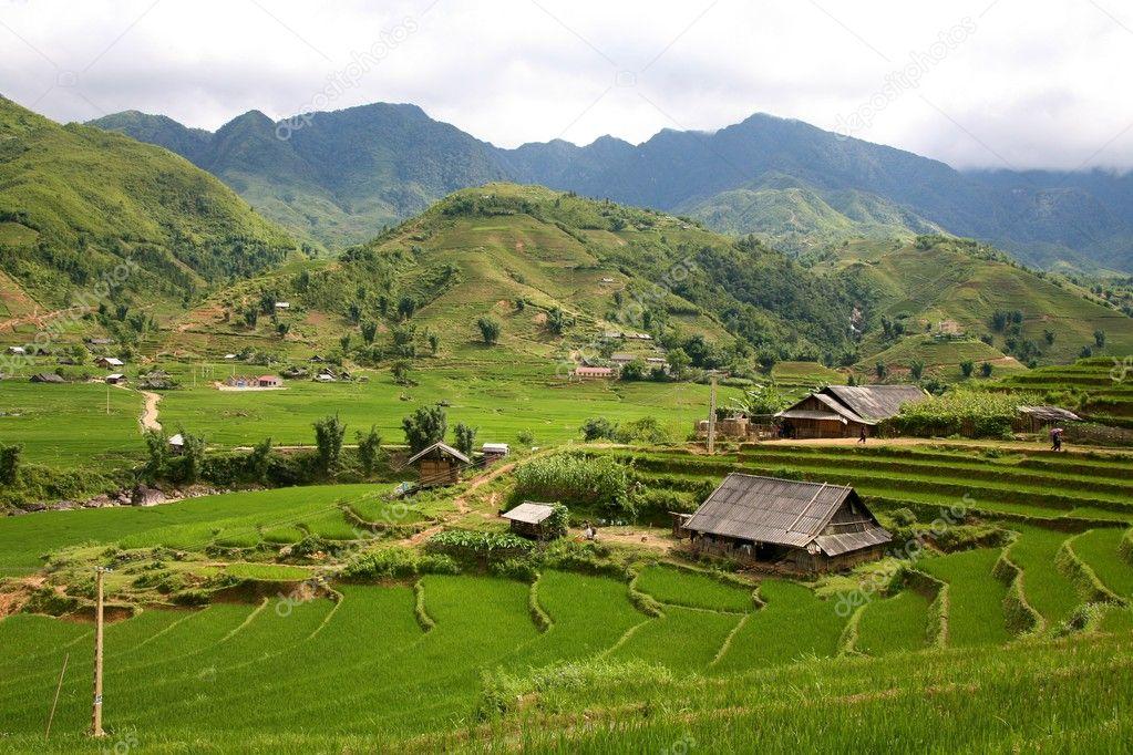 Sapa Vietnam Rice Terraces