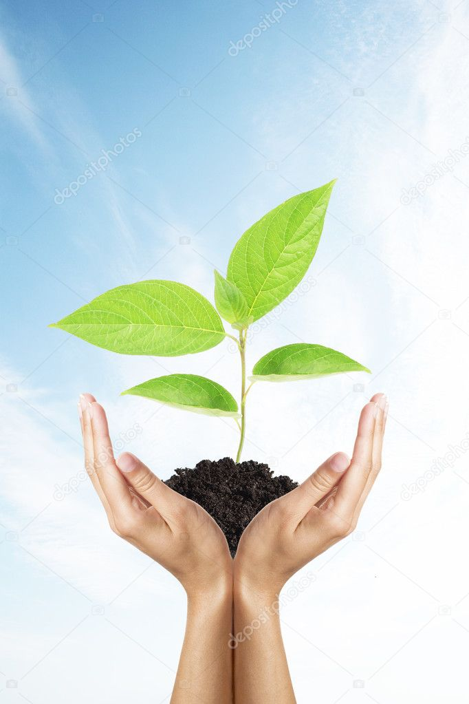 Green plant in woman hands over sky