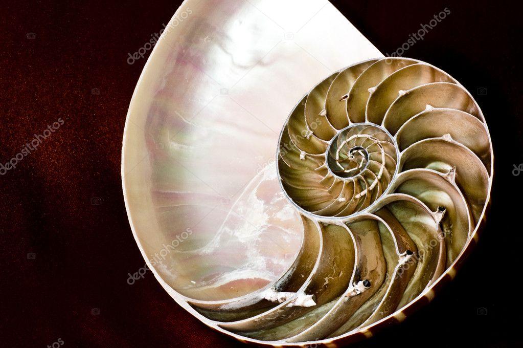 Nautilus e spirale logaritmica