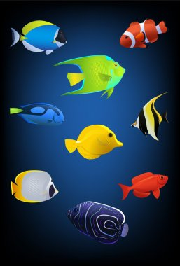 Vector fish collection