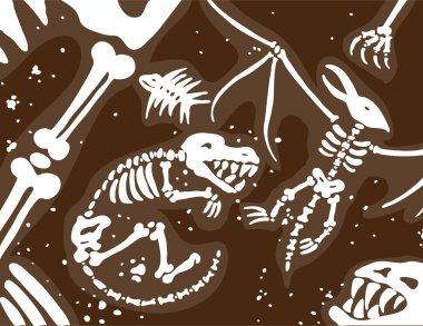Dinosaur Fossils and Bones