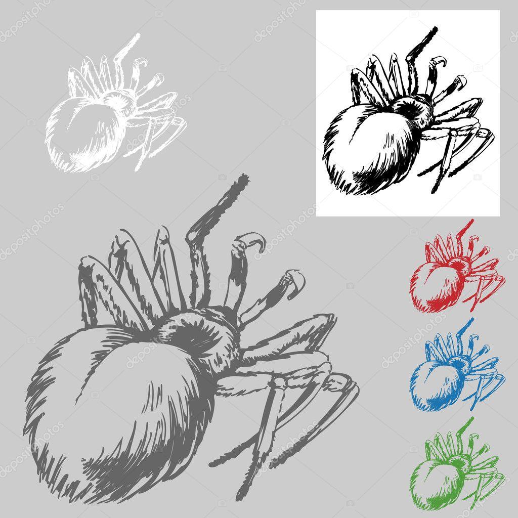 tarántula dibujo — Archivo Imágenes Vectoriales © cteconsulting #4022905