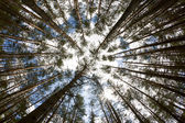 In the deep forest. looking up, shot with fisheye lens