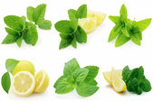 Fresh mint with lemon
