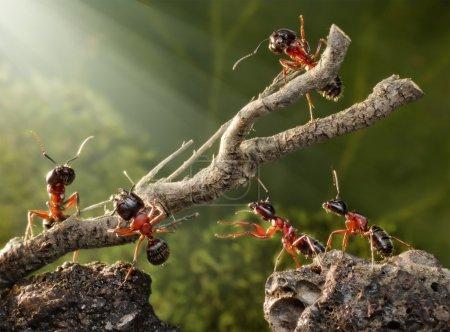 Team of ants breaking down rusty tree