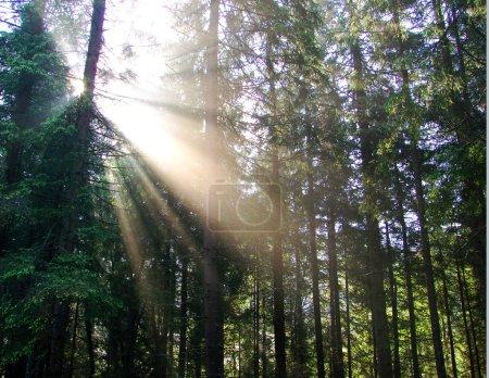 Foto de Una hermosa explosión de luz del sol en el bosque. - Imagen libre de derechos