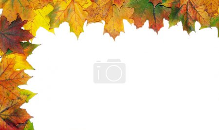 Photo for Frame with colored autumn maple leaves - white background - Royalty Free Image