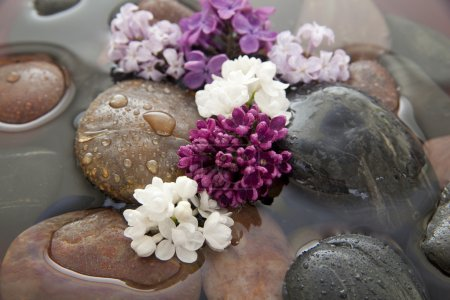 Rocks, flowers, and water