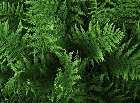 Photo for Wild fern, closeup - Royalty Free Image