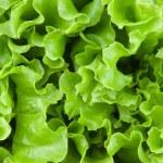 Fresh lettuce leaves closeup...