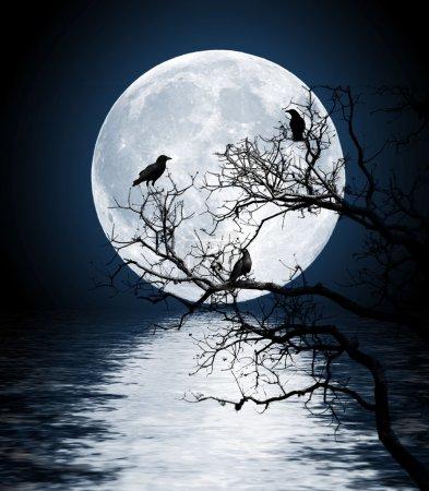 Photo pour Corbeaux assis sur un arbre a brillé avec la pleine lune - image libre de droit