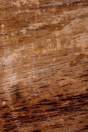 Photo for Wood grungy background - Royalty Free Image