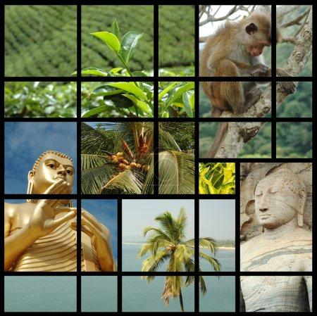 photos de voyage Sri lanka collage avec