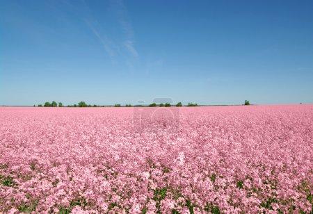 Photo pour Paysage - prairie sur ciel bleu avec des nuages blancs - image libre de droit