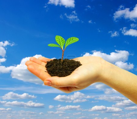 Photo for Plant in hand on sky - Royalty Free Image