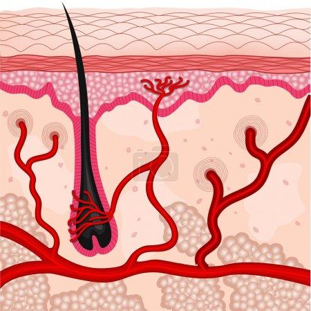 Photo pour Illustration des cellules de la peau humaine - image libre de droit