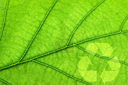 Recycling symbol on leaf