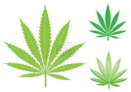 Illustration for Green hemp, cannabis leaf isolated on the white background - Royalty Free Image