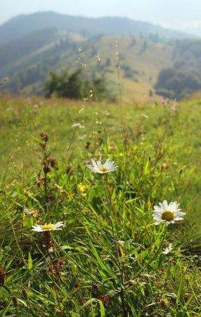Green meadow in Carpathians, Ukraine