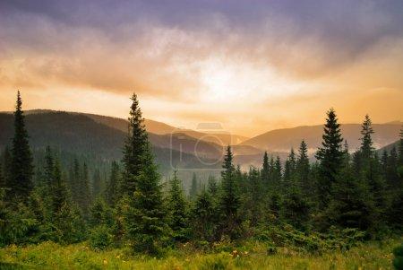 Photo pour Paysage avec brouillard dans les montagnes et les rangées d'arbres dans le matin - image libre de droit