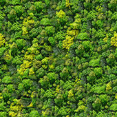 Forest seamless pattern view from above.
