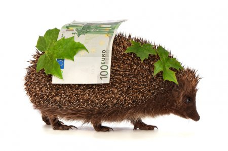 Photo for The hedgehog in motion hastens home from the bank carrying percent hundred euro profit - Royalty Free Image