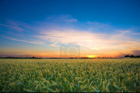Photo of a landscape with a brilliantly detailed foreground and