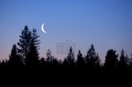 Photo pour Forêt de silhouette avec le croissant de lune - image libre de droit