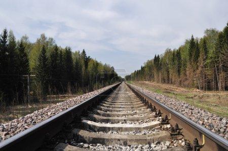 Photo pour Paysage avec voie ferrée en forêt au printemps - image libre de droit