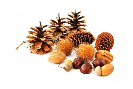 Cones and nuts