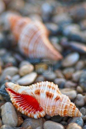 Sea shell on beach