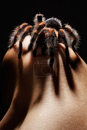 Spider on girl's shoulder