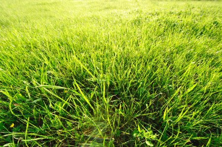 Foto de Prado en la luz del sol matutino - Imagen libre de derechos