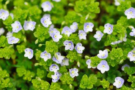 Photo pour Fond de fleur avec profondeur de champ en jachère - image libre de droit