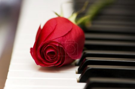 Romantic concept - red rose on piano