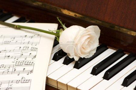 Photo pour Rose blanche sur les partitions et les touches de piano - image libre de droit