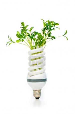 Photo for Energy saving lamp with green seedling on white - Royalty Free Image